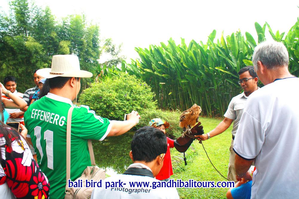 wisata-bali-bird-park