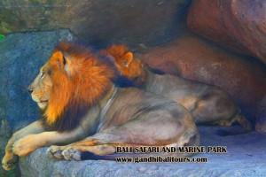 bali-safari