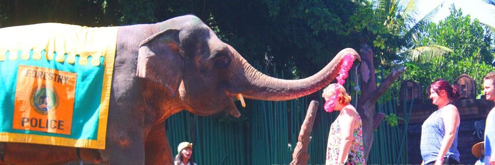show-gajah-di-bali-safari